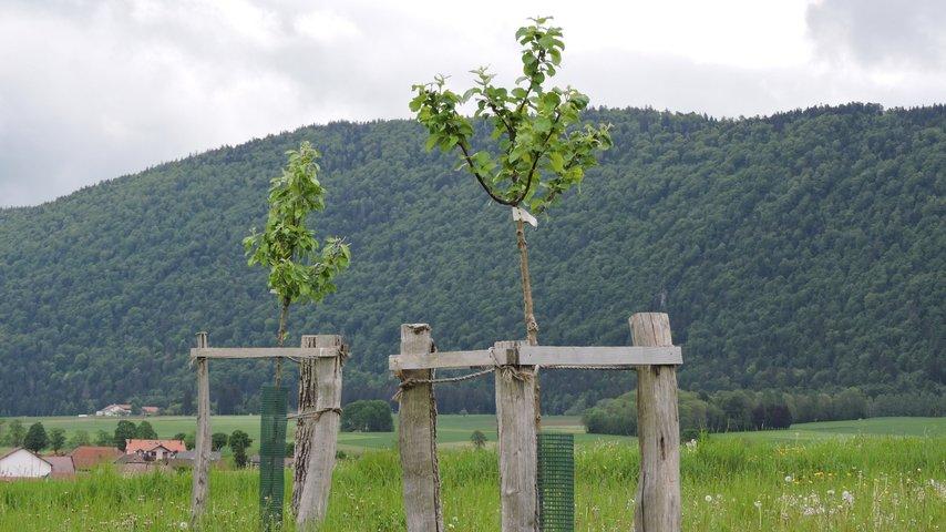 Un verger / un écosystème / une population