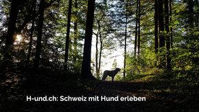 Neue Webseite für Hundefreunde (H-und.ch)