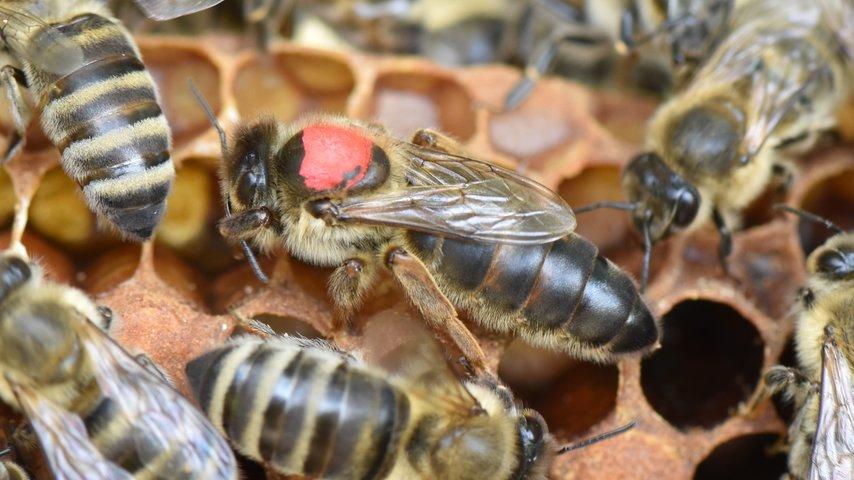 Lehrbienenstand Freiamt: Für die Bienen und die Natur