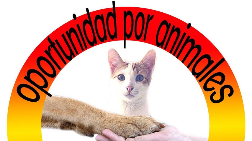 Tierschutzverein: Tieren eine zweite Chance geben
