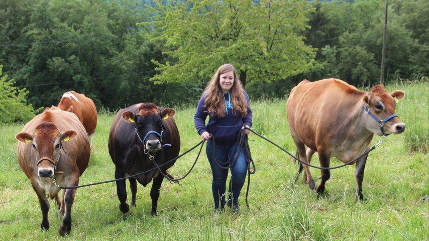 Winterunterstand für Jersey-Drillinge (Kühe)