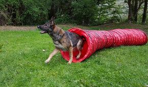 Neugestaltung Hunde-Trainingsplatz in St. Niklaus