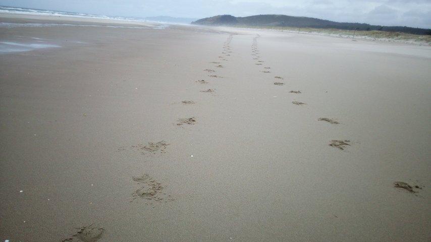 Marche à travers la Nouvelle-Zelande pour la vie