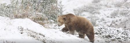 """""""Die Bären in Arosa haben etwas zum Lachen!"""""""