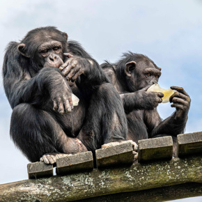 Walter Zoo: der Ostschweizer Zoo seit 1961