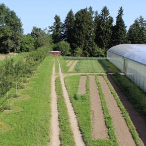 Saisonales Biogemüse aus zukunftsweisenden Anbaumethoden