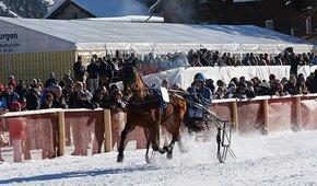 Helft mit, die Pferderennen Arosa zu retten!