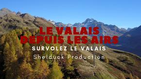 Shelduck Production