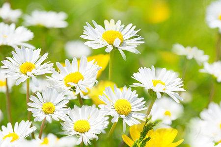 Garten- und Naturprojekte für den Frühling