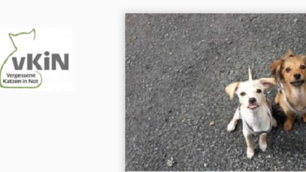 Neues Hundehaus + neues Katzenzimmer für hilflose Tiere!